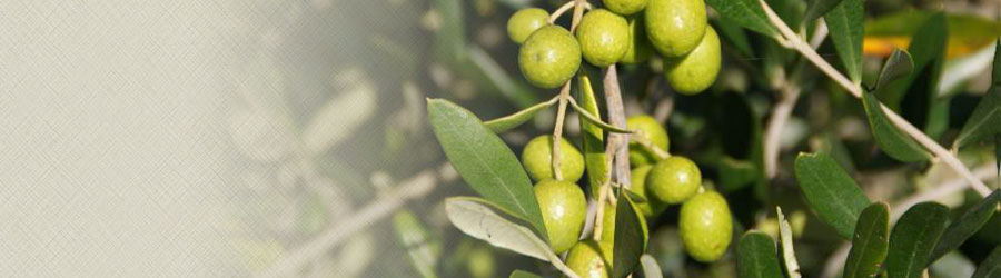 Close up of olives
